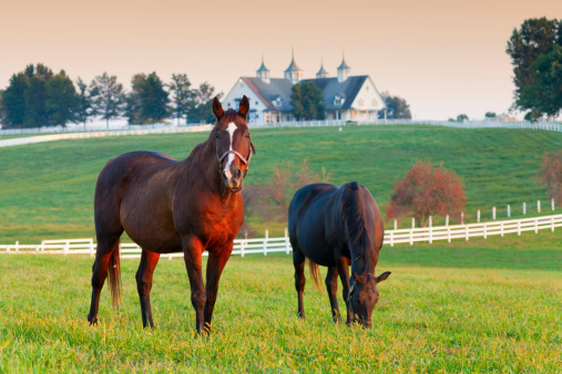 image of two horses in a pasture