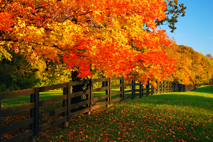 Image of fall trees on country road
